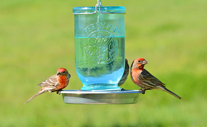 BIRDS WATER STORE FOR A LONGER LIFE